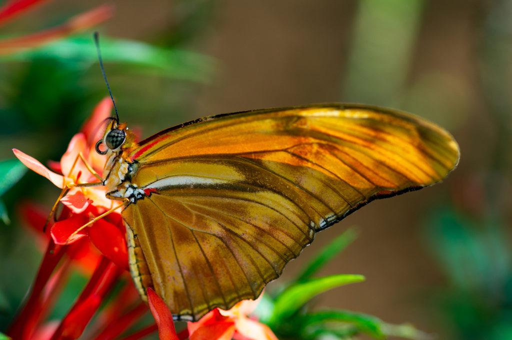 _DSC7508 Schmetterling