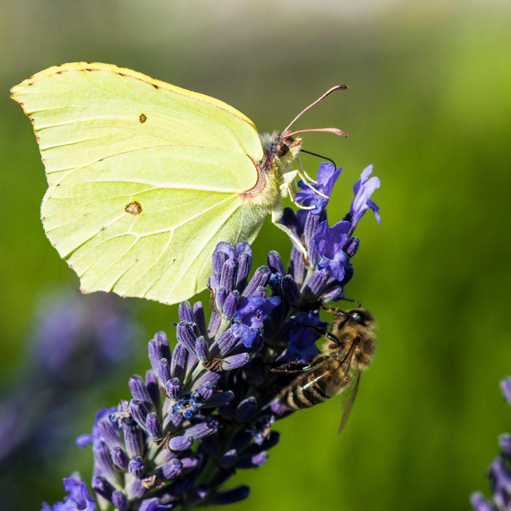 Schmetterlinge05