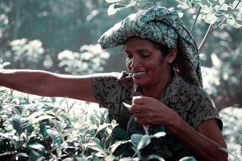 Sri Lanka Teepflückerin
